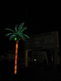 Image for Plaza Del Mar Palm Tree - Marathon, FL
