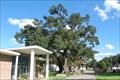 "Image for ""Red Church Oak"" - Destrehan, LA"