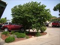 Image for David Bickham tree - Edmond, OK