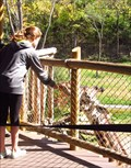 Image for Feed the Giraffes - Cincinnati, OH
