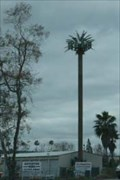 Image for Palm Tree - Calimesa, CA