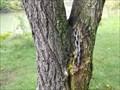 Image for L'arbre enchaîné - Ste-Thérèse, Qc