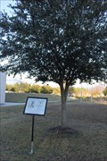 Image for 2nd Lt. Ira C. Welborn Tree -- Ocean Springs MS