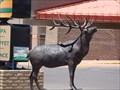 Image for Elk at Tusayan Village - Tusayan, Arizona