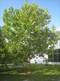 Image for MOSI Second Generation Moon Sycamore - Tampa, FL