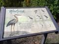 Image for Wading Birds  -  San Jose, CA