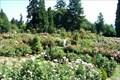 Image for Washington Park - Portland, Oregon