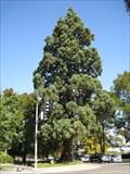 Image for Waldo Park Sequoia - Salem, Oregon
