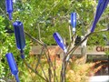 Image for Bottle Tree - Central Park - Winter Park, Florida, USA.
