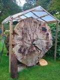 Image for Bergmammutbaumscheibe in der Sequoia-Farm in Kaldenkirchen, NRW, Germany