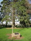 Image for Centennial Tree - Burlingame, CA