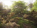 Image for Winston Churchill Tree, Belstone, Okehampton, Devon, UK