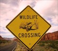 Image for Utah Desert Tortoise Crossing, Snow Canyon, Utah USA
