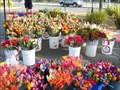 Image for Sunrise Farmers' Market -- Rancho Cordova