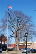 Image for American Elm at the Tioga County Camber of Commerce - Wellsboro, PA