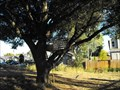 Image for Treehouse - San Juan Bautista, California