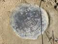 Image for NGS X 11 RESET 2004, Kansas