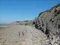 Image for Joggins Fossil Cliffs