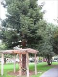 Image for Theodore H Brassinga - Palo Alto, CA