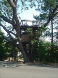Image for Treehouse on Altamont Road, Los Altos Hills, Ca