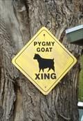 Image for Pygmy Goat Crossing - Wanship, Utah