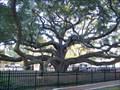Image for Baranoff Park - Safety Harbor, FL