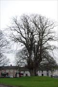 Image for The Lime Tree - Duleek Co Louth Ireland