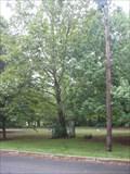 Image for Holliston, MA Moon Tree
