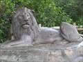 Image for Lion - Busch Gardens - Tampa Bay, Florida.