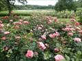 Image for Rose garden at Gråsten Palace, Denmark