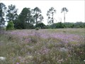 Image for Field of Phlox - Wildwood, FL