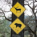 Image for Elks and Boars