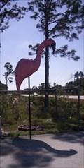 Image for Florida Flamingo
