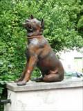 Image for Two dogs - Blansko, Czech Republic