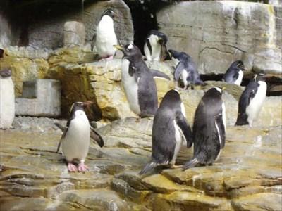 Oceanarium at Shedd Aquarium - Chicago, IL