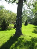 Image for Shoe Tree - East Amherst, NY
