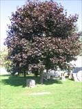 Image for Julia's Tree - Dexter, NY