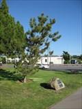 Image for Sister City Tree - Santa Clara, CA