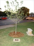 Image for Staci McAuley tree - Edmond YMCA -  Edmond, OK