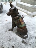 Image for Animals in War - Ottawa ON
