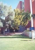 Image for University of Arizona, Tucson Sycamore Moon Tree