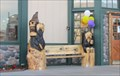 Image for Black Bear Diner Bears - Fremont, CA