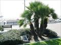 Image for Vietnam War Memorial, Eisenhower Park, Seal Beach, CA, USA