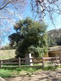 Image for Oak of the Golden Dream