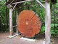 Image for Ohanapecosh Tree Ring Display - Mt. Rainier National Park