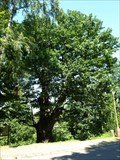Image for Dub sv. Václava / St. Wenceslas Oak, Príbram, Czech republic