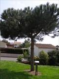 Image for Une vie un arbre - Saint Philbert de Bouaine,FR