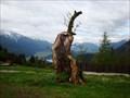 Image for 400 Jahre Esche Buchen, Tirol, Austria