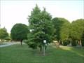 Image for Strom tisíciletí - Millennium tree, Otrokovice, Czech Republic