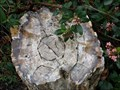 Image for Petrified Log - Menlo Park, California